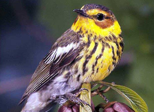 bird_migrants.jpg