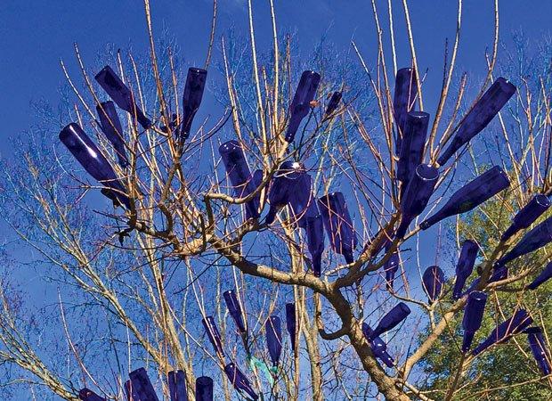 blue_bottle_tree.jpg