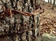 Remnants of the past in Shenandoah National Park