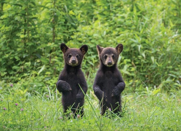 """Mirror Image Cubs"" by Drew Senter."