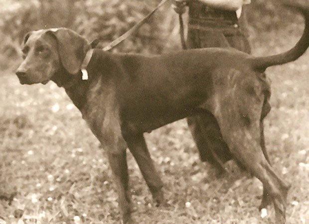 Ain't Nothing Like a Hound Dog - Smoky Mountain Living