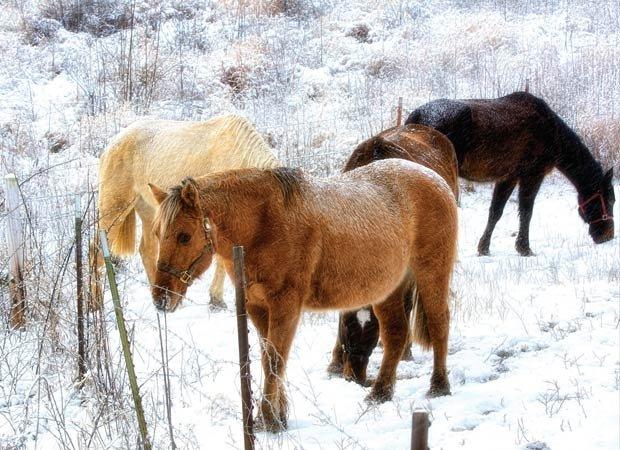 Winter graze