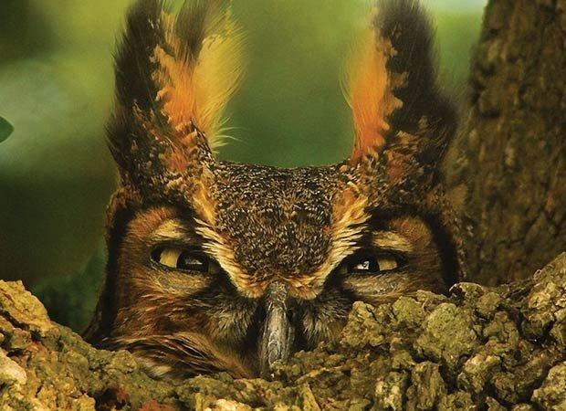 dept_owls.jpg