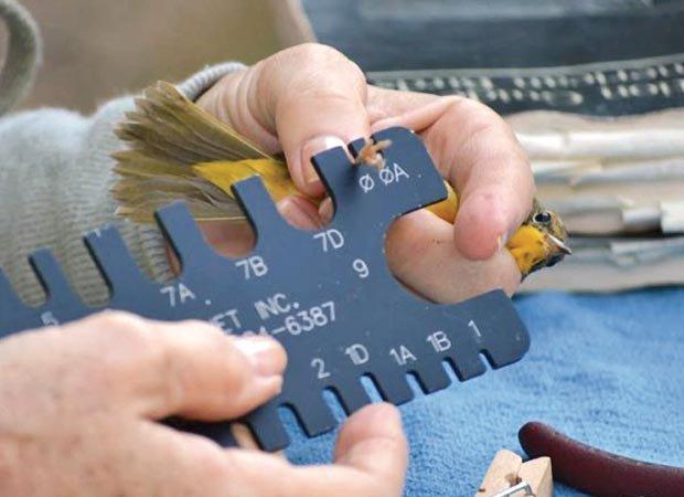 dept_birdsanctuary.jpg