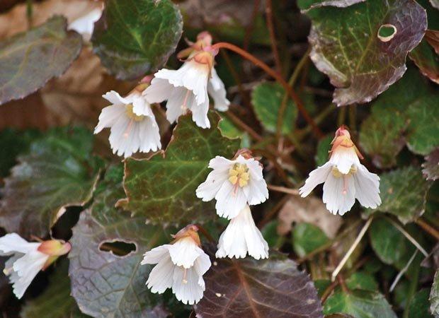dept_wildflowers2.jpg