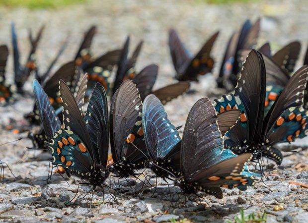 Butterflies converge