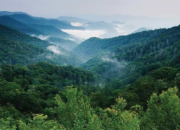 Cherokee National Forest
