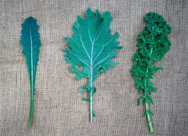 Kale until Christmas