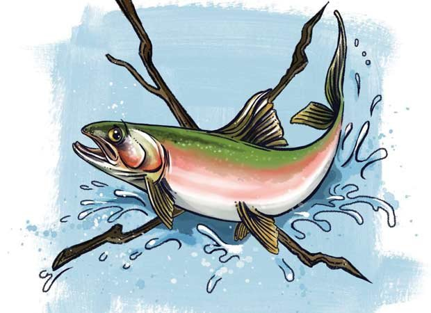 The trout and the bedpan