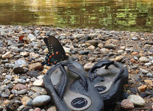 butterflyflipflop.jpg