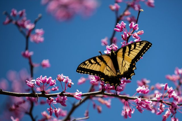 spring photo essay smoky mountain living cades cove butterfly
