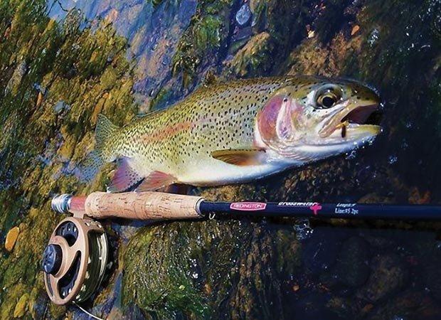 Never doubt a trout