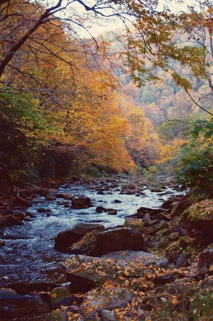 Autumn Amble