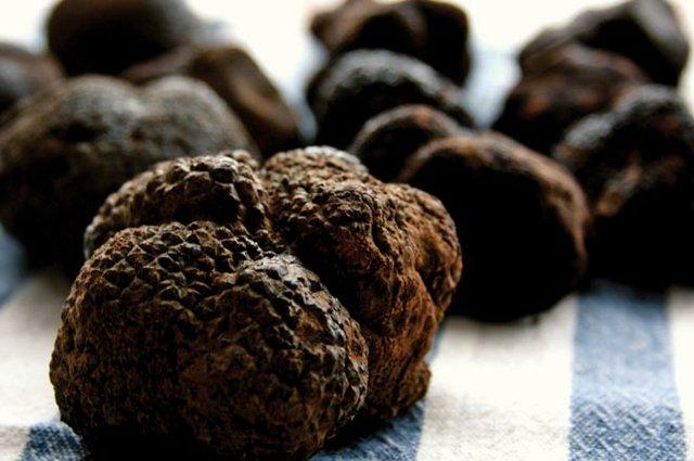 Truffles in the Smokies