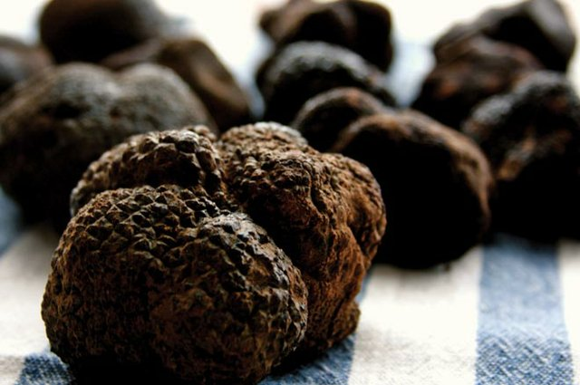 Truffles in the Smokies