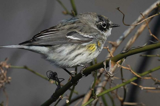 Birding in the Great Smoky Mountains
