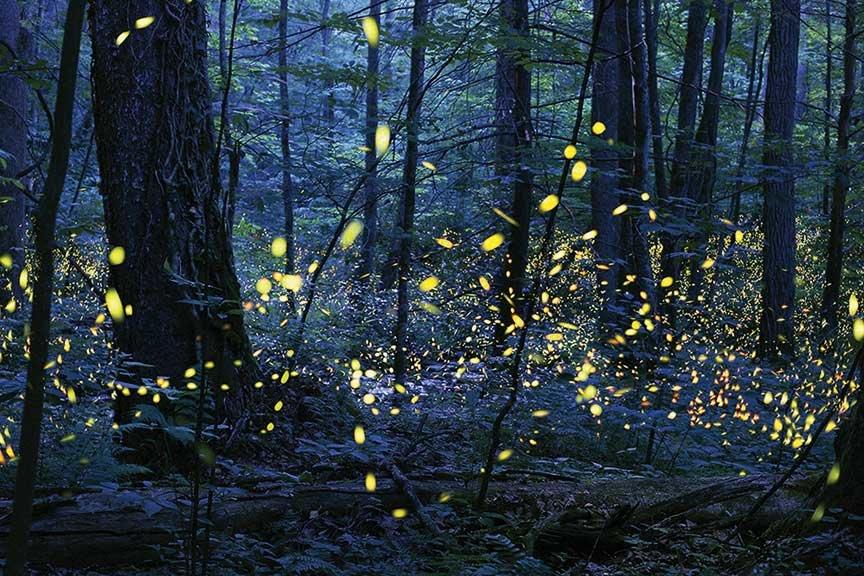 Firefly talk