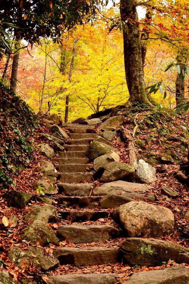 Fall Stairs by Sam Hobbs.jpg