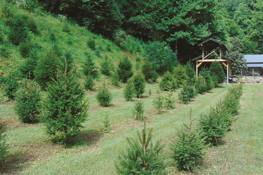 Rooted in History - Smoky Mountain Living