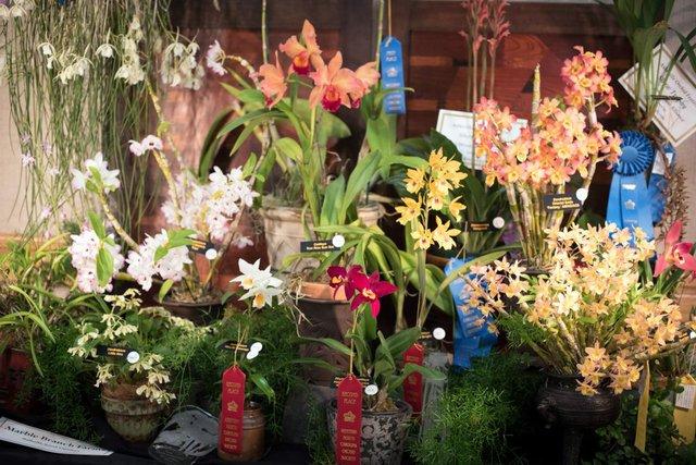 OrchidShow_3_CCP-1024x684.jpg