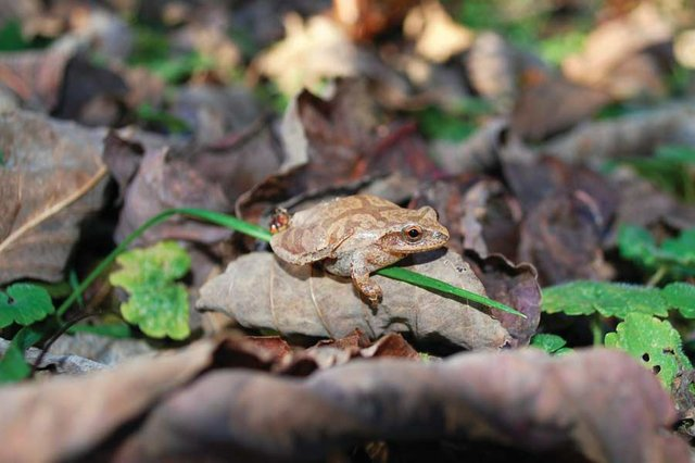 Sights, Smells, and Sounds in Our Spring Forests