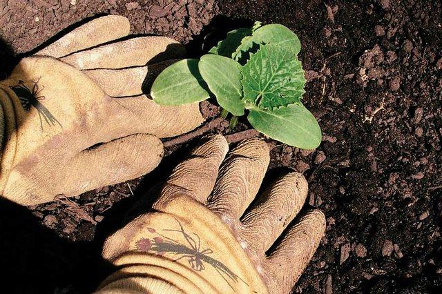 dept_gardening.jpg