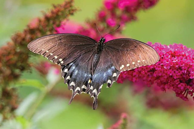 Insects are the Pollinator Professionals