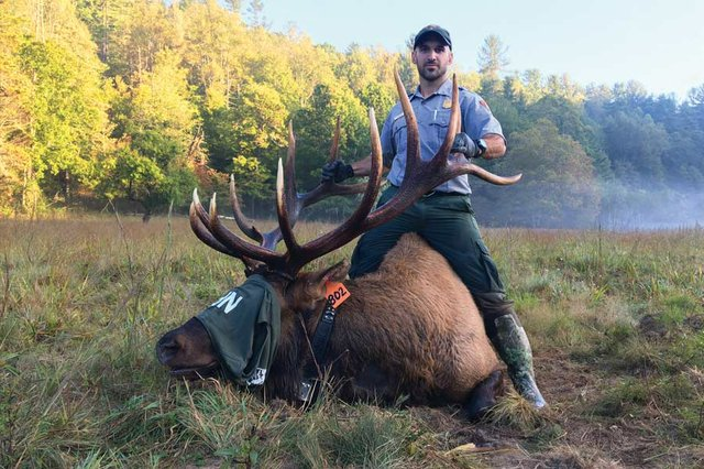 A Conversation With the Smokies' Elk Guy