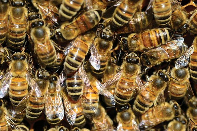 dept_bees.jpg