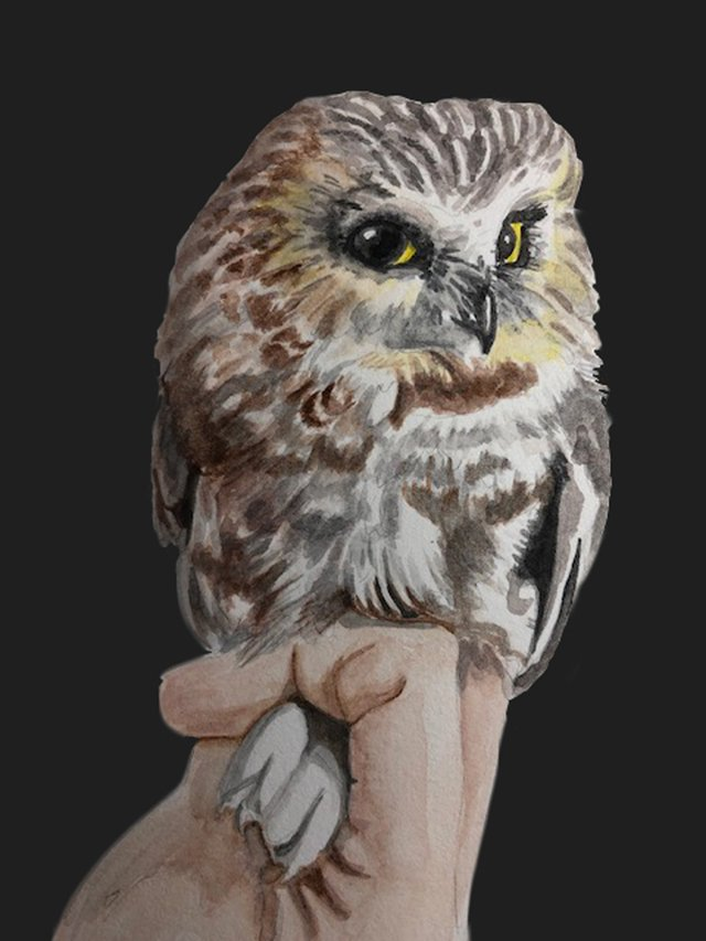 Sandy Melton  Owl  300 dpi.jpg