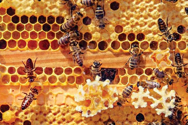 dept_bees2.jpg