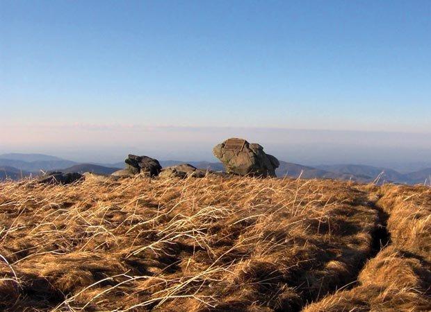 Grassy Ridge Bald at Roan Mountain